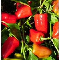 Семена перца сладкого Ред Барон : 10шт