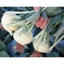 Семена кольраби Корист F1 : 0,5гр