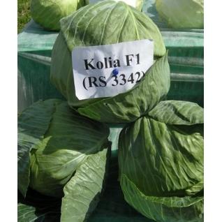 Семена капусты белокочанной Коля F1 - 2500шт