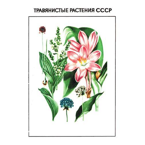 Травянистые растения СССР 38732207