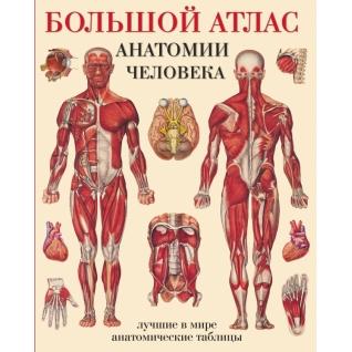 Махиянова Е.Б.. Книга Большой атлас анатомии человека, 978-5-17-077910-9, 978517053411118+