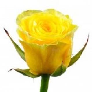 Розы 80