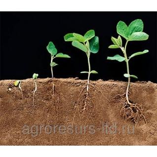 Регуляторы роста растенийРегалис, ВДГ (100 г/кг)