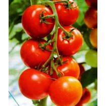 Семена томата Лоджейн : 10шт