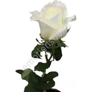Роза Близард 60 см
