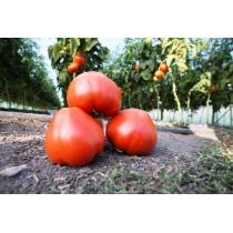 Семена томата Махитос F1: 5шт