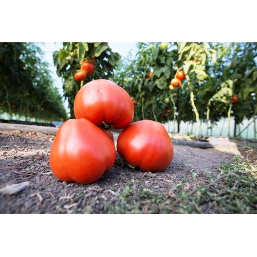 Семена томата Махитос F1: 5шт 36985982