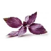 Семена базилика Рози : 1гр