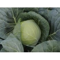 Семена капусты белокочанной Газель F1 : 0,5гр