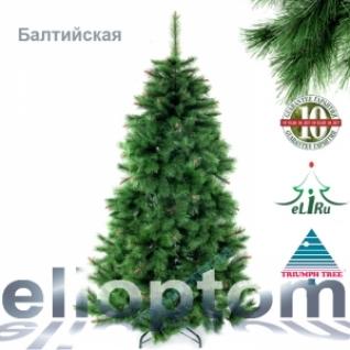 Ель Балтийская 215 см. зеленая Триумф