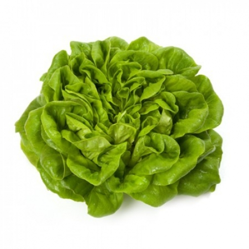 Семена салата Аквино : 20шт 36986217