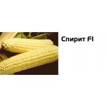 Семена кукурузы Спирит 1кг