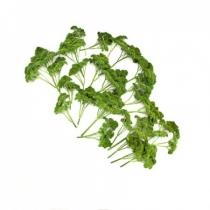 Семена петрушки Москраузе : 0,25кг
