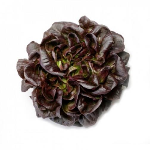 Семена салата Гоген : 5000 шт 36986086