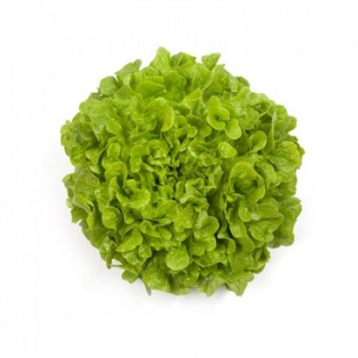 Семена салата Кирибати : 5000шт 36986017