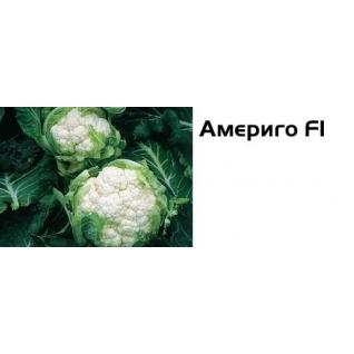 Семена цветной капусты Америго F1 - 2500шт