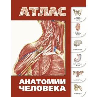Сергей Левкин. Книга Атлас анатомии человека, 978-5-17-072530-418+