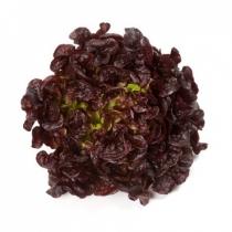 Семена салата Роксай : 5000шт