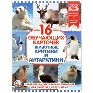 """Карточки В Папке. """"Умка"""" Животные Арктики И Антарктиды.Объем: 16 Карточек. 167Х218мм"""
