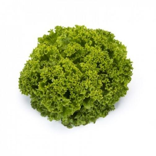 Семена салата Ландау : 5000 шт 36986042