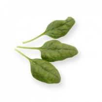 Семена шпината Пума F1 : 1гр