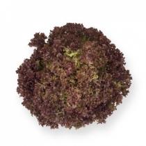 Семена салата Энтони : 5000 шт