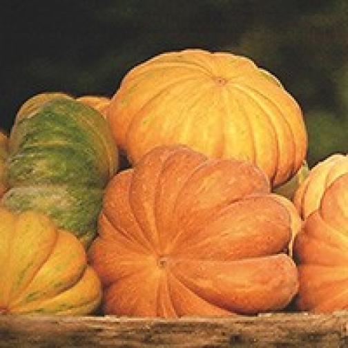 Семена тыквы Прованс : 5шт 36985947
