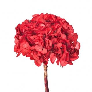 Ветка Гортензии Ø20 cm Красный