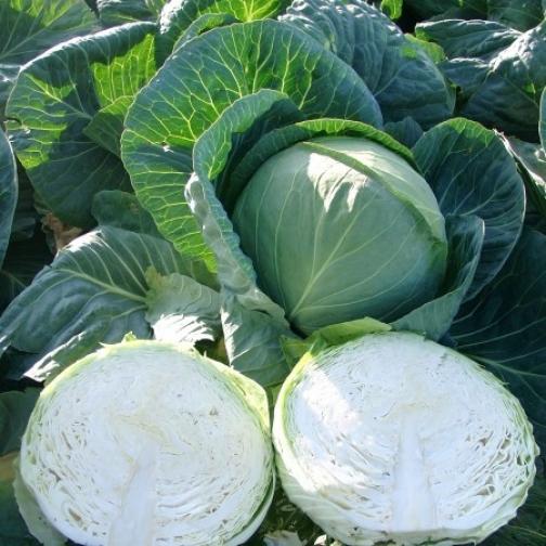 Семена капусты белокочанной Секома F1 - 1000шт 36985967