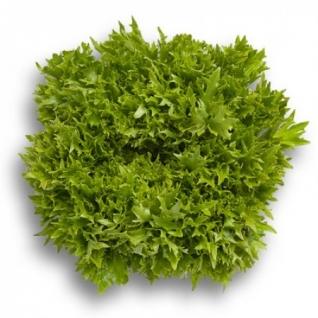 Семена салата Эксайт : 5000 шт