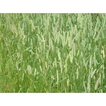 Семена травосмесей