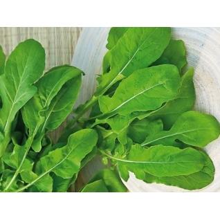 Семена руколы Колтивата F1 : 2гр