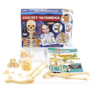 """ОПЫТЫ """"ИГРАЕМ ВМЕСТЕ"""": СКЕЛЕТ ЧЕЛОВЕКА В РУСС. КОР. в кор.36шт Shantou City Daxiang Plastic Toy Products Co.,Ltd"""
