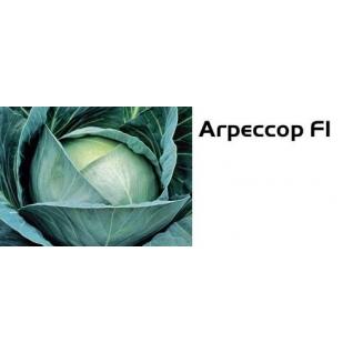 Семена капусты белокочанной Агрессор F1 - 2500шт