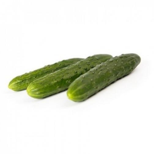 Семена огурца Данди F1 - 1000шт 36986123