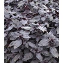 Семена базилика Рози F1 - 0,25кг