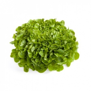 Семена салата Кук : 5000 шт