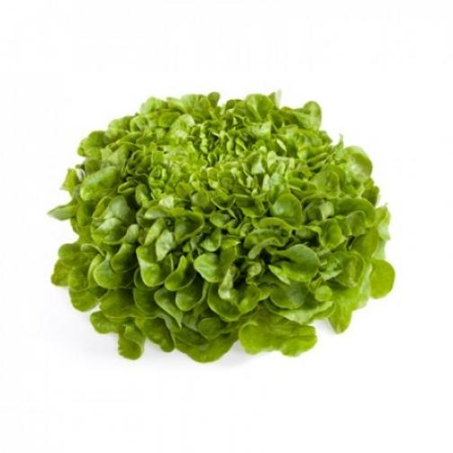 Семена салата Кук : 5000 шт 36986083