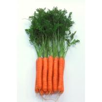 Семена моркови Монанта : 0,5гр