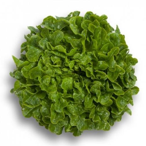 Семена салата Гумбольд : 20шт 36986213