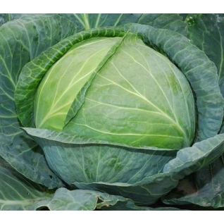 Семена капусты белокочанной Агрессор F1 : 0,5гр