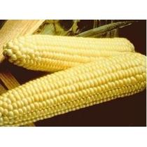 Семена кукурузы сладкой Спирит : 5гр