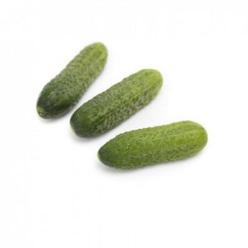 Семена огурца корнишона Саунд F1 - 1000шт 36986081