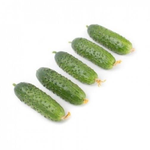 Семена огурца корнишона Гравина F1 - 1000шт 36986065