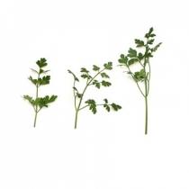 Семена петрушки Фелиция : 0,25кг