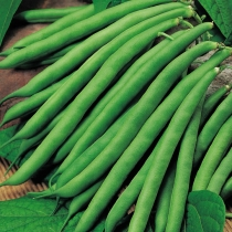 Семена фасоли Серенгети F1 : 10шт