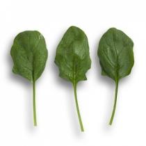 Семена шпината Боа : 100 000шт