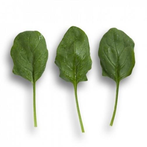 Семена шпината Боа : 100 000шт 36986189