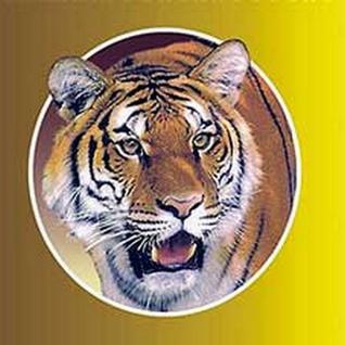 Согревающий Тигровый пластырь 20 штук Китай