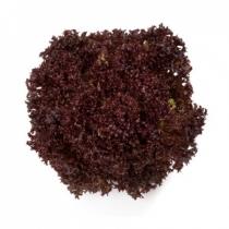 Семена салата Кармези : 5000 шт